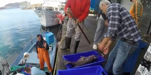 Primeira venda de pescado rendeu 15 milhões de euros ao setor das pescas açoriano este ano
