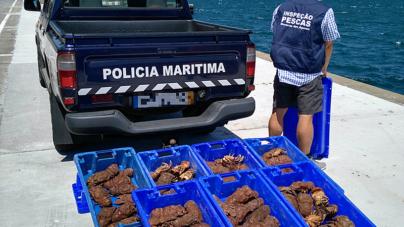 Polícia Marítima colabora com a Inspeção Regional das Pescas dos Açores e apreende 72 Kg de pescado