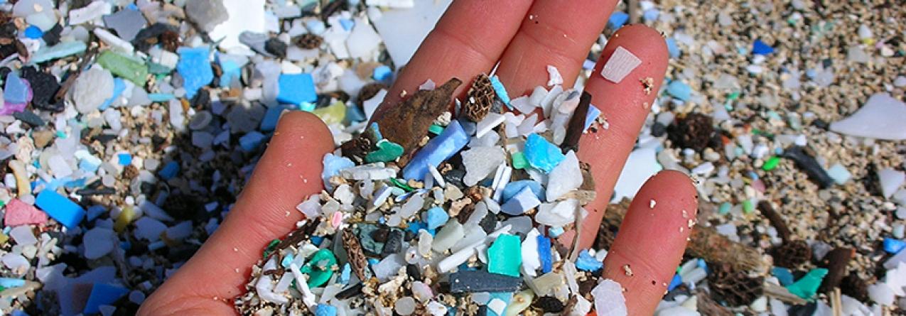 Universidade de Aveiro descobre no mar a solução para erradicar os microplásticos