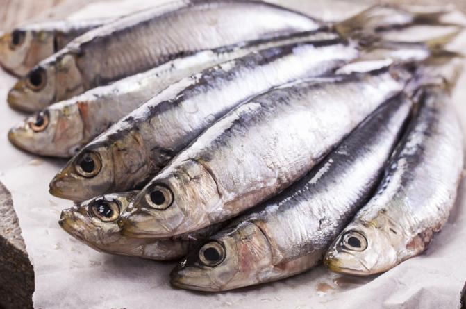 Parecer defende suspensão da pesca da sardinha por 15 anos