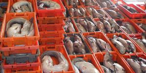Valor do pescado comercializado nas lotas portuguesas subiu 3,3% até Agosto