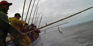 Conferencistas de vários países discutem nos Açores pesca do atum com salto e vara