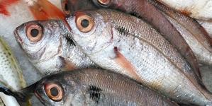 Açores aumentam em 34 toneladas quota de goraz para 2017