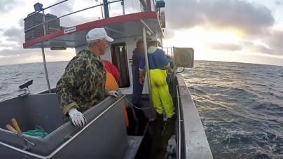 Governo dos Açores participa em consulta pública da União Europeia sobre possibilidades de pesca para 2018