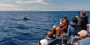 Açores foram eleitos, pela segunda vez, como Destino Quality Coast de Platina