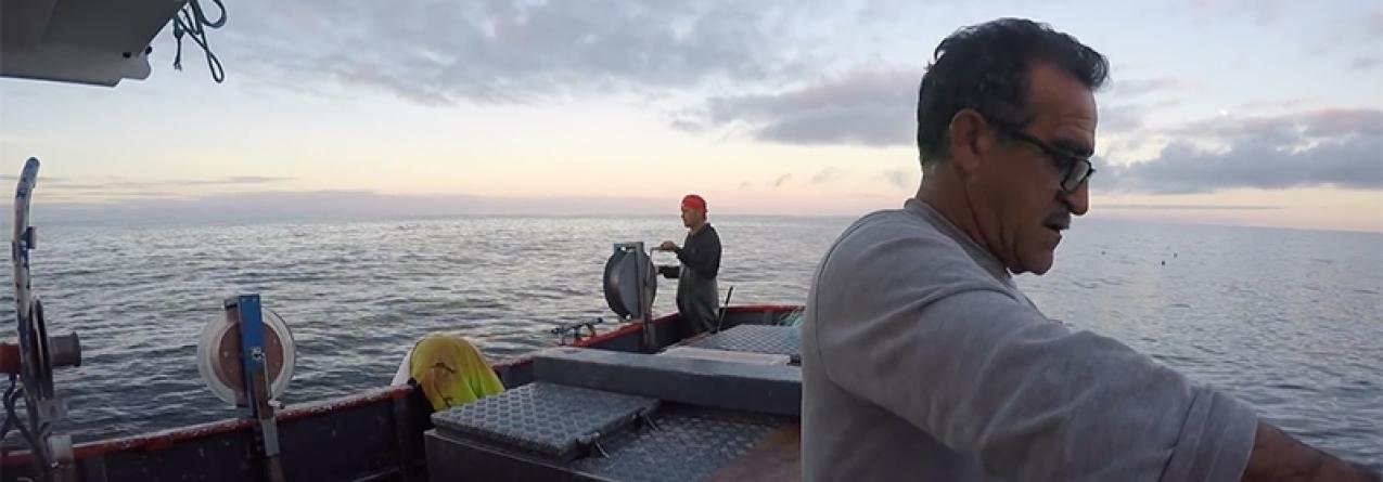 Goraz vai ser pescado livremente nos Açores mas haverá limite por embarcação