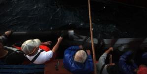 Armadores preferem outras medidas para proteger stock de sardinha