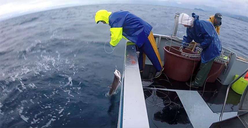Aumento de 6% das verbas para as pescas dos Açores é pouco