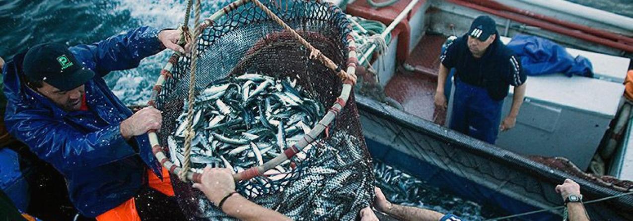 Bruxelas não proíbe pesca de sardinha mas quer que Portugal veja situação com seriedade