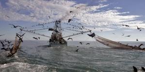 Transição das pescas para a sustentabilidade das pescas tem de começar imediatamente