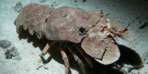 Governo dos Açores altera regulamentação de pesca por armadilha