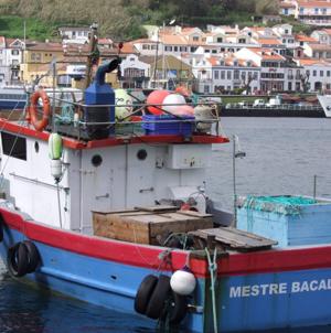 Barco de Pesca encalha na ilha do Faial (vídeo)