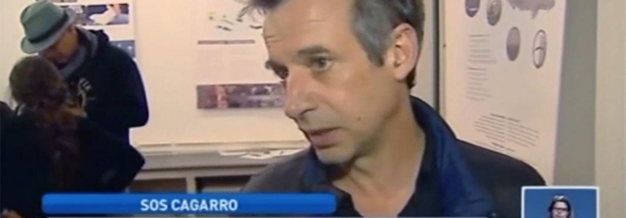 Açores // Campanha SOS Cagarro mobiliza cada vez mais voluntários (vídeo)
