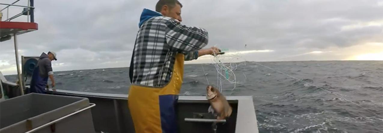 Açores // Faltam 120 toneladas para o fim da quota e o goraz e peixão estão a ser comprados em lota a preços mais baixos do que em 2016