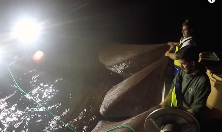 Pescadores querem ganhar 585 euros de ordenado mínimo e Federação das Pescas dos Açores propõe 150