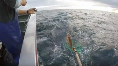 """Açores // Pesca do goraz este mês rendeu """"o dobro"""" de dezembro de 2016"""