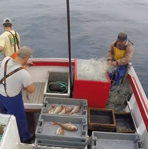 Governo dos Açores estabelece novo limite máximo de captura de goraz por embarcação