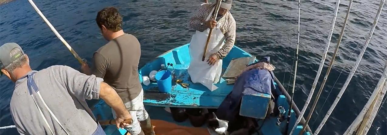 Açores // Valor da pesca já ultrapassou os 24 milhões de euros do ano passado