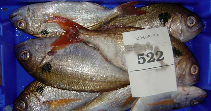 Peixe da ilha das Flores mais uma vez retido por falta de disponibilidade de carga nos voos da SATA