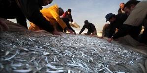 Balanço das pescas: onde está o peixe português?