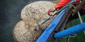 Ministros da ue fazem progressos mas teimam em adiar o fim da sobrepesca