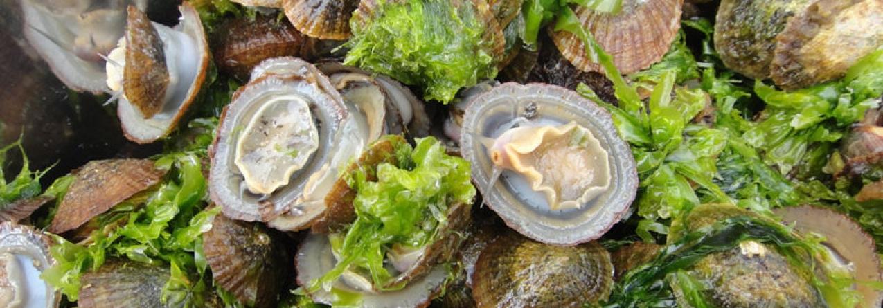 Licenças de apanhador de espécies marinhas nos Açores prolongadas por três meses