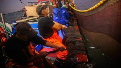Diário de Bordo. A sardinha é o novo caviar: andámos 48 horas à pesca para saber porquê