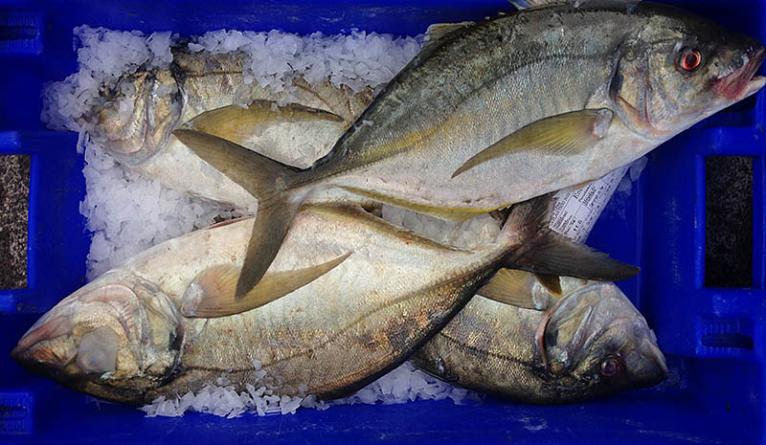 Inspeção Regional das Pescas dos Açores realizou mais de 1.600 inspeções em 2017
