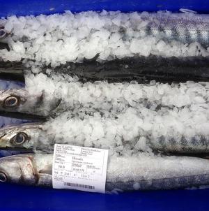 Governo dos Açores regulamenta funcionamento de lotas, entrepostos, postos e veículos de recolha de pescado