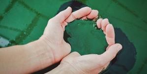 Aquacultura // Arranca na Graciosa produção artesanal de spirulina
