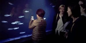Oceanário de Lisboa tem um novo aquário de sardinhas