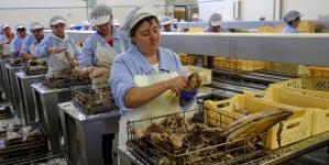 Governo dos Açores assegura que conserveira Santa Catarina manterá fábrica em São Jorge