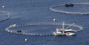 Economia do Mar precisa de 160 mil trabalhadores