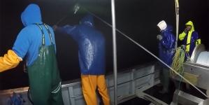Governo dos Açores pagou Fundopesca a cerca de 680 pescadores no valor de 200 ME