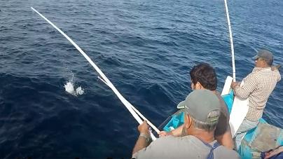 Sindicato rejeita completamente reestruturação do setor das pescas nos Açores