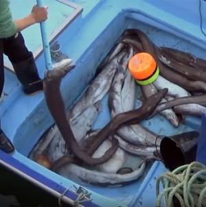 """Incentivos para abate de embarcações de pesca nos Açores é um """"rude golpe"""" no sector"""", diz PCP"""