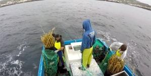 Pesca nos Açores já rendeu mais meio milhão de euros do que no ano passado