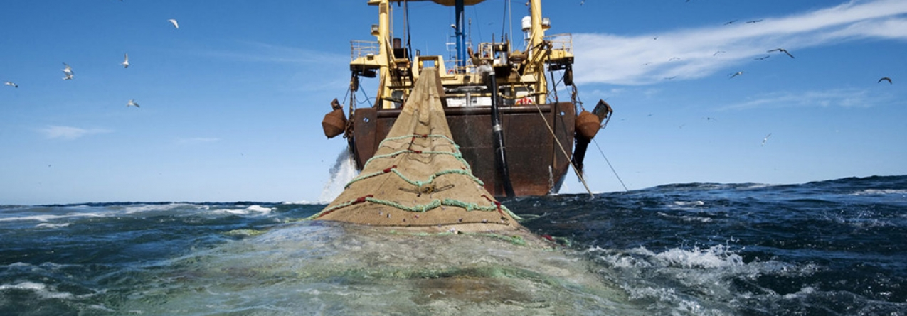 Estudo contraria dados da FAO sobre capturas globais de pescado