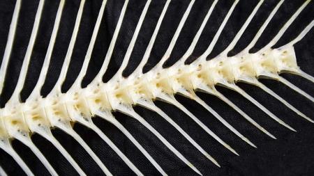 Investigadores aproveitam espinhas de peixe para criar sensores óticos