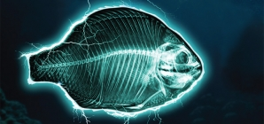 Chefs europeus recusam confecionar peixes eletrocutados