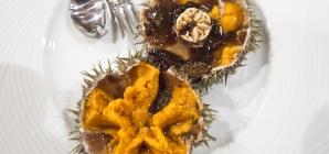Festival Internacional do Ouriço-do-Mar de regresso à Ericeira