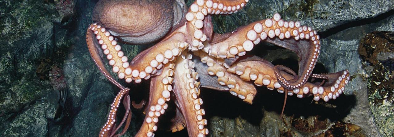 Governo dos Açores prolonga licenças para apanha de espécies marinhas por mais dois meses