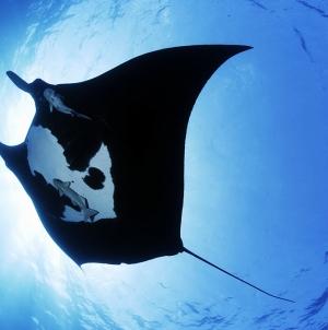 Cooperação entre Açores e Cabo Verde é fundamental para a conservação de grandes pelágicos, afirma Diretor Regional dos Assuntos do Mar
