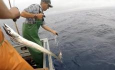 Diretor Regional das Pescas defende necessidade de adaptação do regime de gestão da capacidade de pesca nas Regiões Ultraperiféricas