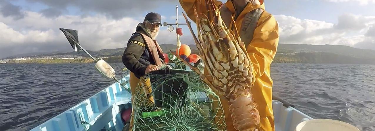 Espetacular pescaria de lagosta, cavaco e santola na ilha Terceira (Video)