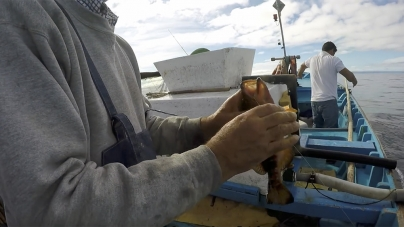 """Porto de Abrigo considera """"inaceitável"""" proposta para desmantelamento da frota nos Açores"""