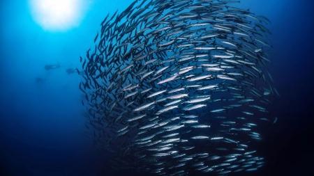 PS quer consenso sobre prioridade nacional à economia do mar
