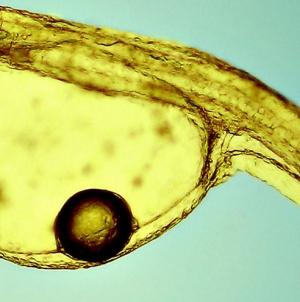 Açores vão ter banco de microalgas para desenvolver biotecnologia azul