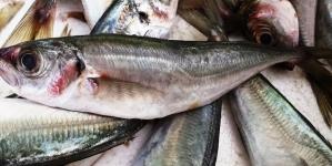 Associação dos Comerciantes do Pescado dos Açores explica por que o chicharro chegou a 25 euros o quilo