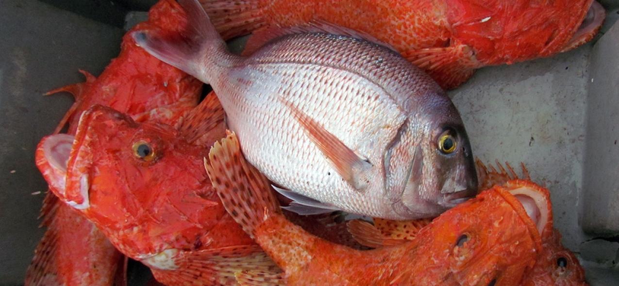Valorização do pescado com a informação disponibilizada pela Estação Costeira